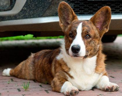 Собака для души и здоровья