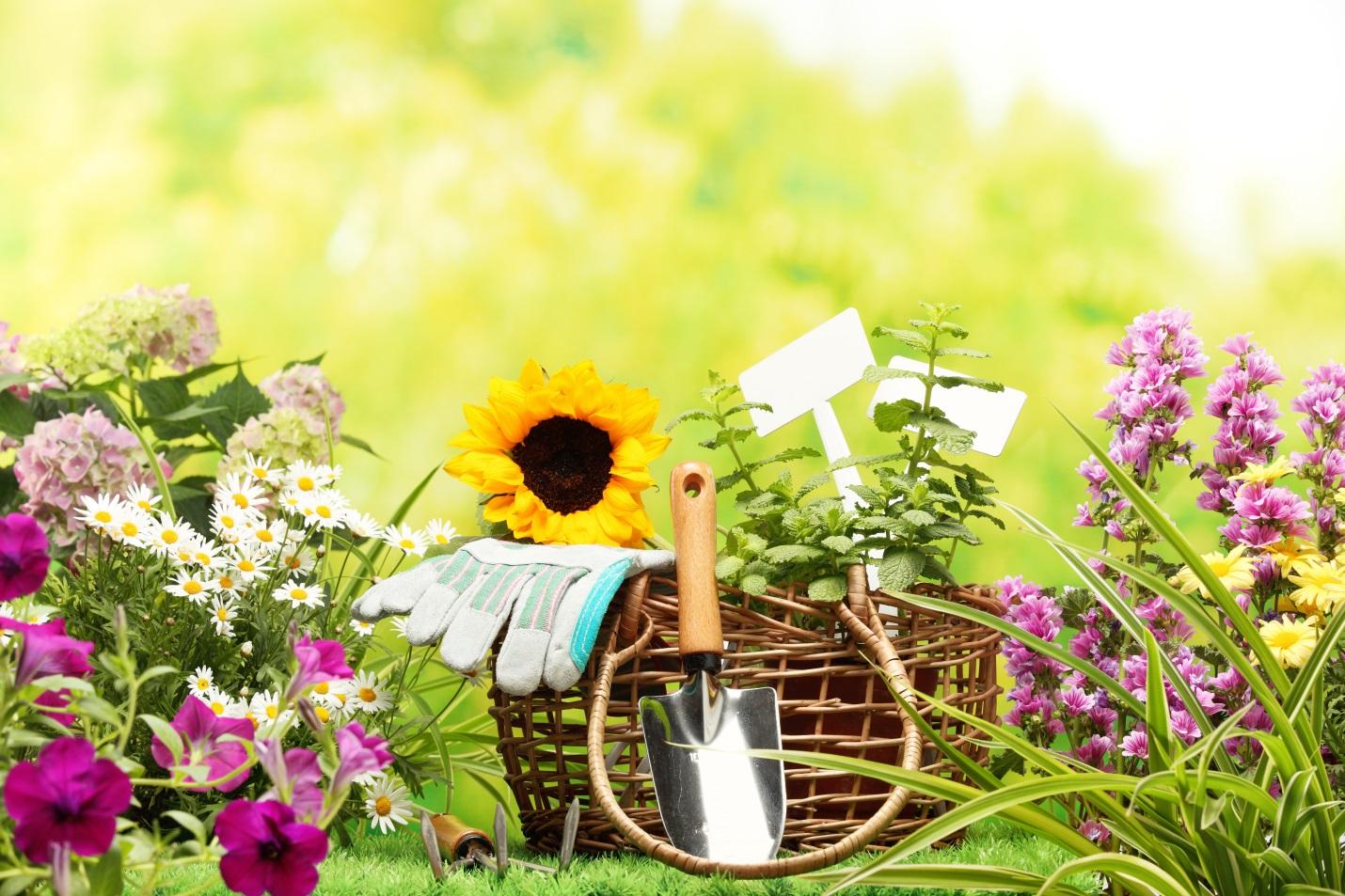 Правильный уход за садом